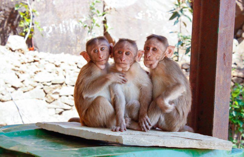 image of London Zoo
