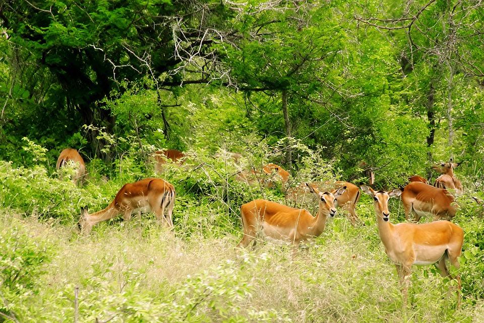Kruger, South Africa-safari destinatios