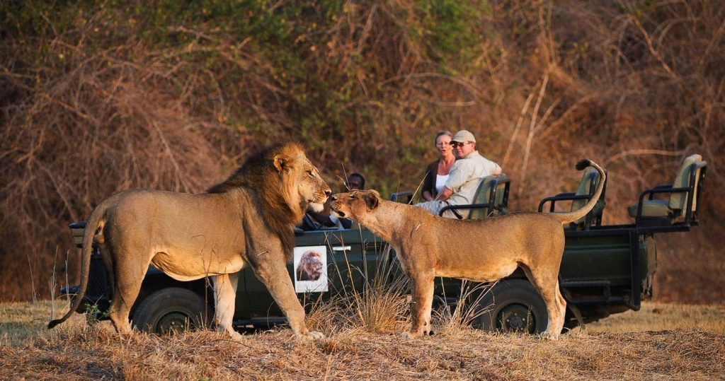 South Luangwa, Zambia-safari destinations